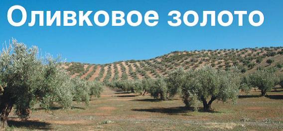 Оливковое золото