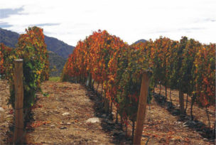 San Pedro de Yacochuya 2006 (Argentina). Terroir