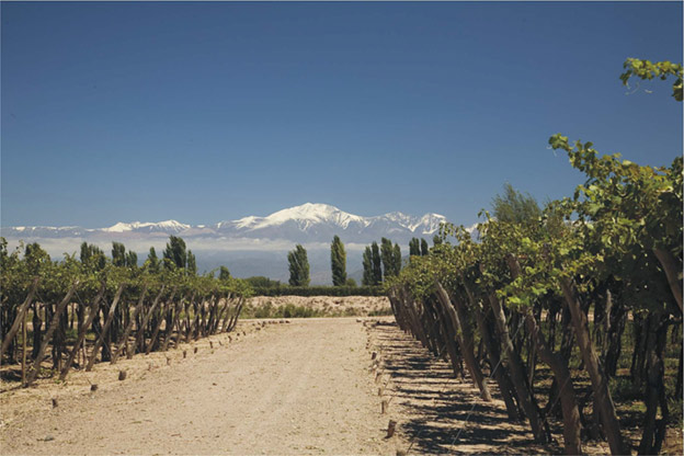 Winemaking traditions of Argentina