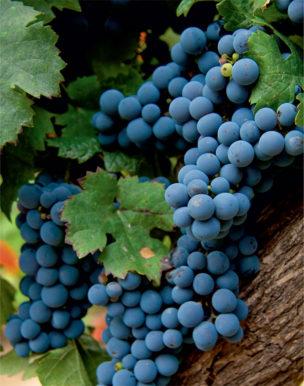 Вино Аргентины — божественный дар