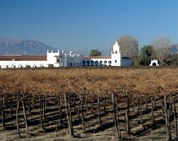 Вино Аргентины — божественный дар: Виноградники в Сальте (Аргентина)