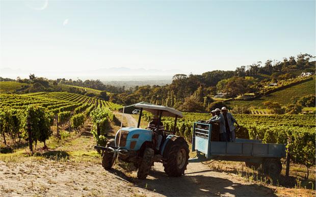 Биодинамическое виноградарство