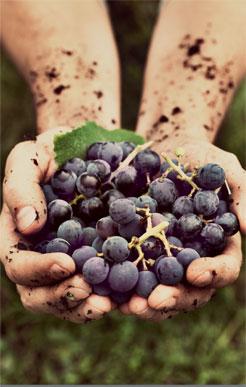Природное виноградарство