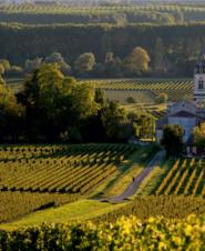 Классификация вин Бордо