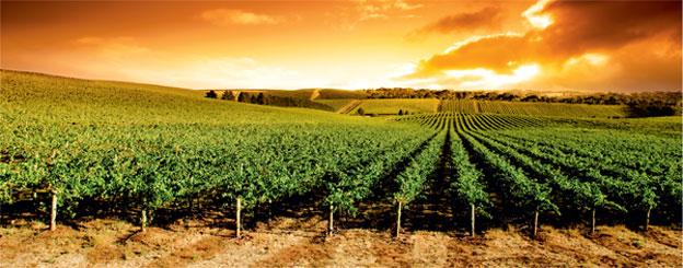 Органическое виноградарство