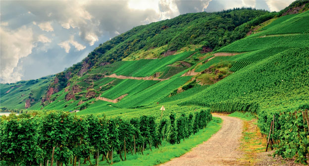 Вина Германии. Журнал Код де Вино