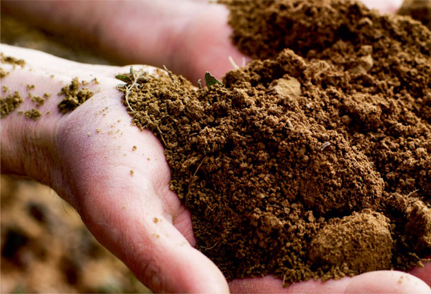 Characteristics of Soils for Winegrowing