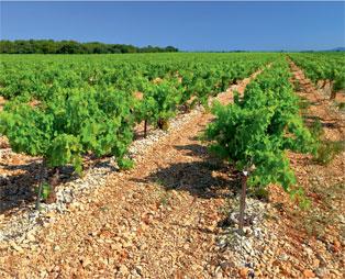 Characteristics of Soil Profiles